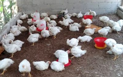 Viard Poultry Project Evaluation